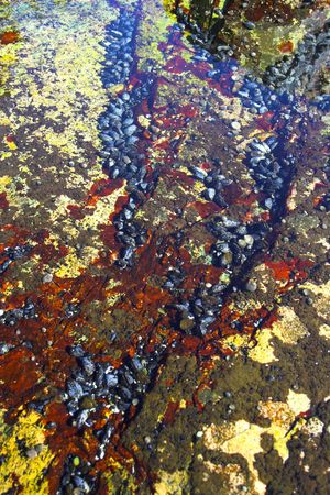 Underwater tidal communities of atlantic seashore in New England during their famous Autumn Stock Photo - 1208075