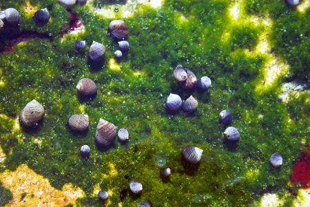 Underwater tidal communities of atlantic seashore in New England during their famous Autumn Stock Photo - 1208072