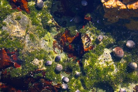 Underwater tidal communities of atlantic seashore in New England during their famous Autumn Stock Photo - 1208071