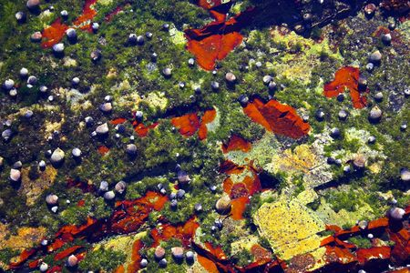 Underwater tidal communities of atlantic seashore in New England during their famous Autumn Stock Photo - 1208070