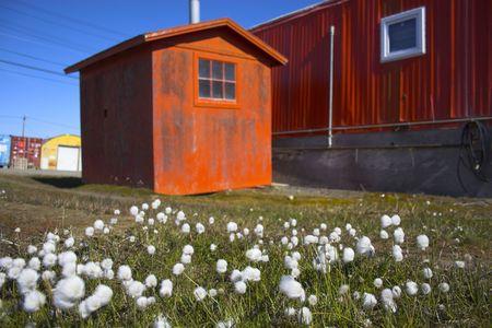 オレンジ色の建物の背景に北極の花 写真素材