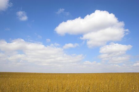 Farm landscapes with sunny maize soy and wheat fields