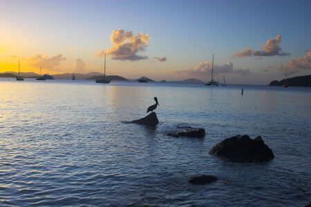 Wild brown pelican fishing at sunset near the shore of a tropical island Stock Photo - 2890776