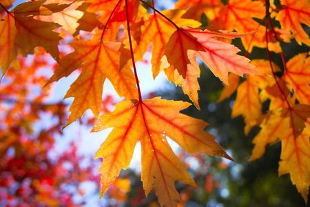 fragments: Fall colors, fragments and scenes for backgrounds