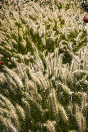 Fragment of the prairie in late summer Imagens
