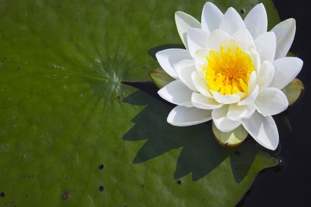 vegatation: Scenic view of the pond with wild water lily in Boundary Water Canoe Wilderness