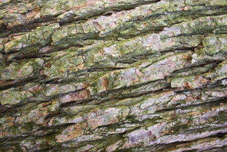 Tree bark textures and patterns for backgrounds design 版權商用圖片