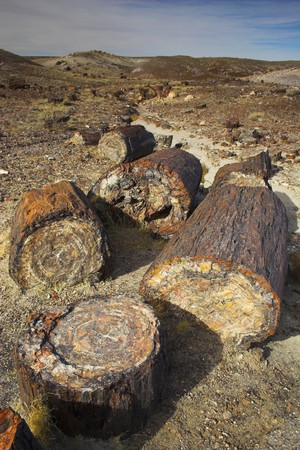 Unique geologic formation with logs petrification during prehistoric mineralization, Petrified Forest and Painted Desert National Park  photo