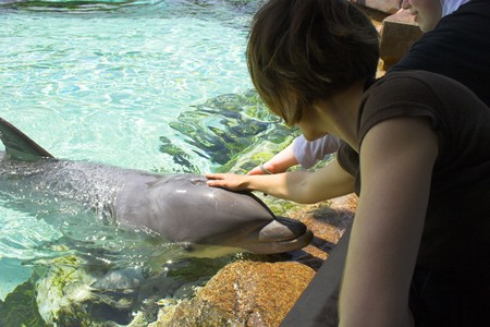 aquarium visit: Dolphins in the clear blue pond interacting with public