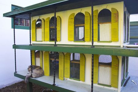 hemingway: Gray cat sleeping on the balcony of toy sized Hemingway house in Key West, Florida Stock Photo