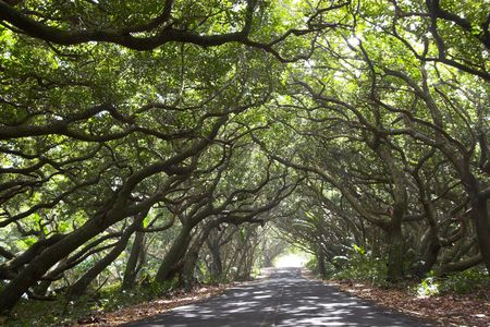 road bike: Beautiful Kalapana road with tree canopy and bikers Stock Photo
