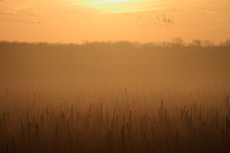 nebraska: Beautiful sunset in the corn field