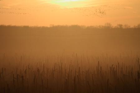 champ de mais: Magnifique coucher de soleil dans le champ de ma�s Banque d'images