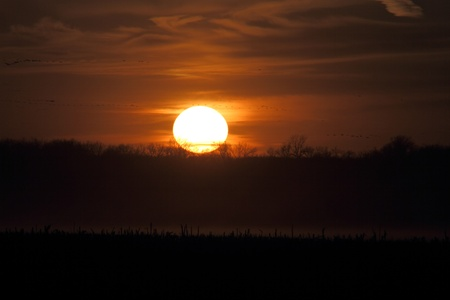 Beautiful sunset in the corn field photo