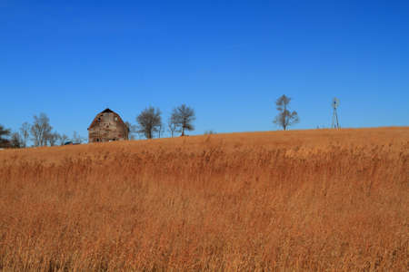 Field of dry grass and blue sky photo