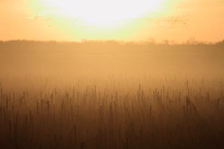 winter sunrise: Beautiful sunset in the corn field