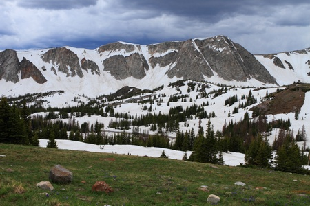 Meadows with wildflowers in the Snowy Range Mountains of Wyoming photo