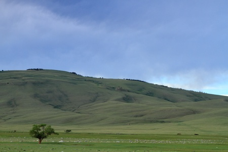great plains: Lone tree in the mountain landscape of Wyoming