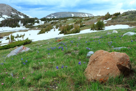 Meadows with wildflowers in the Snowy Range Mountains of Wyoming