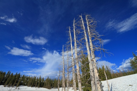 Landscapes in the Snowy Range Mountains of Wyoming photo