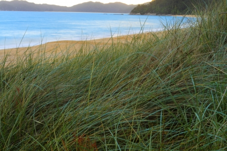 Beautiful sunset on sandy beach of Abel Tasman National Park, South Island, New Zealand Stock Photo - 13844060