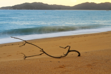 Dry tree branch laying on the sandy beach of Abel Tasman National Park, South Island, New Zealand  Focus intentionally on the branch  photo