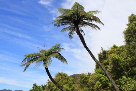 ヤシの木と熱帯林の他高密度成長する植物 写真素材