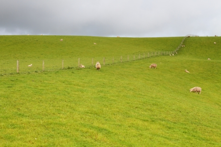 Green meadows with sheep grazing in a beautiful area of Catlins, New Zealand photo