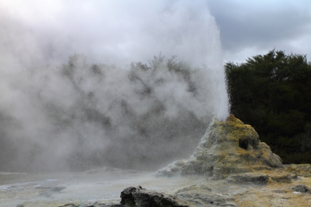 Lady Knox Geyser erupting in Rotorua, New Zealand