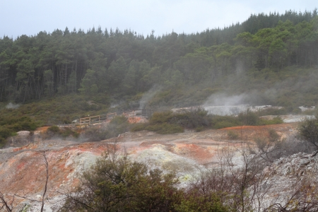 Volcanic landscape with steaming hot springs in Rotorua, New Zealand