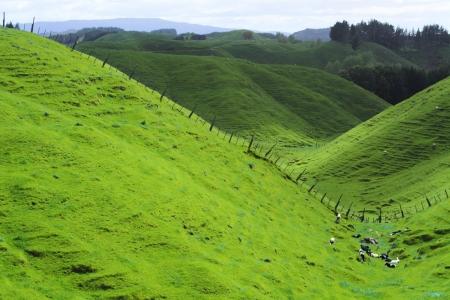 Green beautiful meadows with rolling hills in Rotorua, New Zealand photo