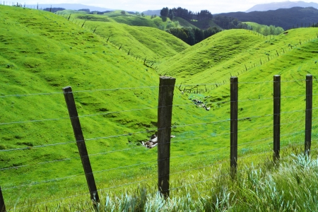 Green beautiful meadows with rolling hills in Rotorua, New Zealand