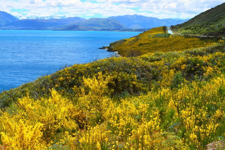 Yellow wildflowers blooming on a beautiful lake shore, South Island, New Zealand photo