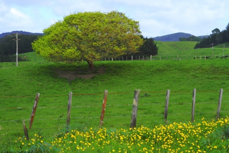 Green beautiful meadows with rolling hills in Rotorua, New Zealand photo