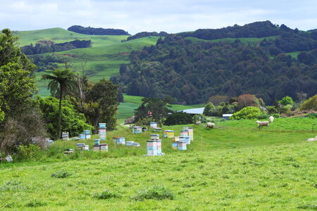 Bee hives in green beautiful meadows of Waitomo, New Zealand