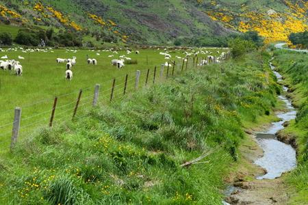 vistas: Beautiful mountain vistas and grazing sheep in South Island, New Zealand