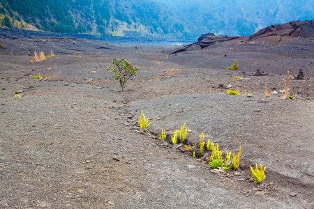 kilauea: Young ferns and ohia lehua plants growing through old lava at the barren bottom of Kilauea Crater in Hawaii Volcanoes National Park, Big Island, Hawaii Stock Photo
