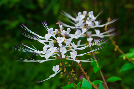whiskers: whiskers plant blooming