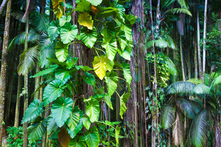 bark of palm tree: Fragment of a lush tropical jungle in Hawaii
