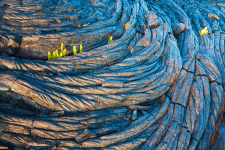 hawaii: Amazing old lava pattern and new fern growing through it in Hawaii Volcanoes National Park, Big Island, Hawaii