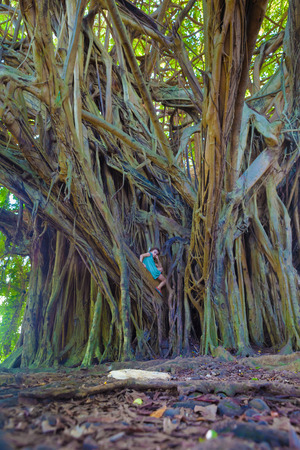 sitting on the ground: Little girl climbing on a giant banyan tree in Hawaii