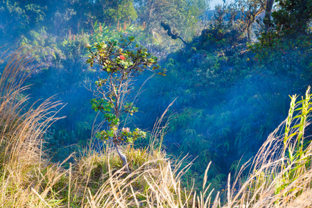 vents: Fumes from sulfur gas vents along the trail in Hawaii Volcanoes National Park, Big Island, Hawaii Stock Photo