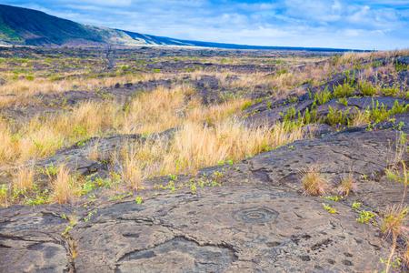 hawaii: Ancient petroglyphs on lava along the trail in Hawaii Volcanoes National Park, Big Island
