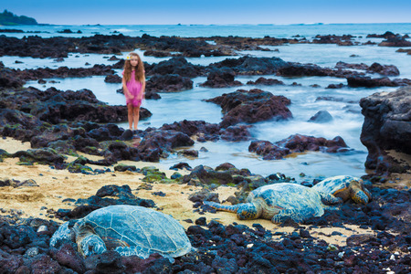 Little girl exploring a volcanic rocky shore with green sea turtles resting  in Hawaii. The focus is on turtles, background is intentionally blurred.