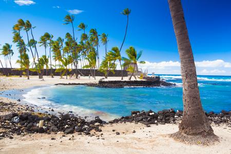 big: Las palmeras que crecen en sitio antiguo hawaiano Pu'uhonua O Honaunau Parque Histórico Nacional en la isla grande, Hawaii