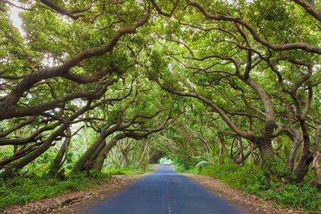 big island: Road covered by tree canopies on Big Island,  Hawaii Stock Photo