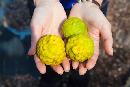 lemon: Hands holding three exotic lemons