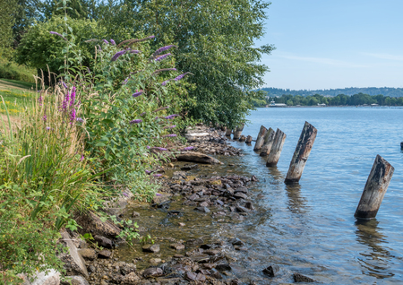 pilings: Old pilings line the shore at Coulon Park in Renton, Washington.