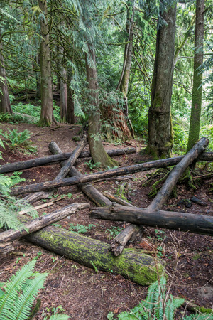 pacific northwest: Logs litter the forest floor in the Pacific Northwest.