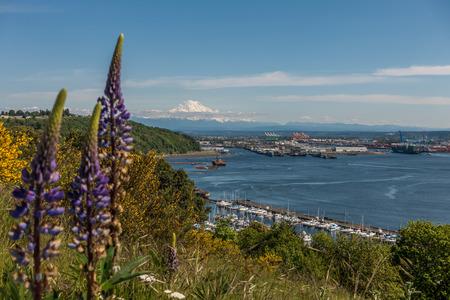 tacoma: Majestic Mount Rainier rises up over the Port of Tacoma in Washington State.